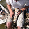 Andy Glass working with Osprey Chick on Rappahannock River