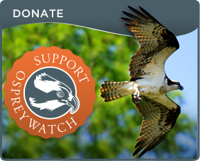 Donate to OspreyWatch