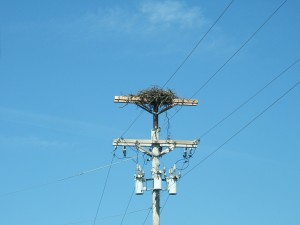 This nest was elevated above the energized equipment and the transformer busing covers were covered up.