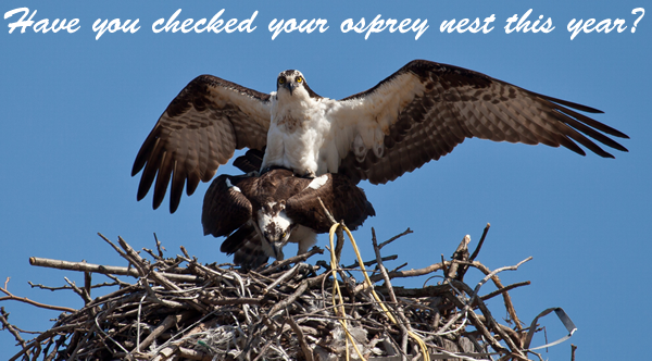 Have you checked on your nest this season?